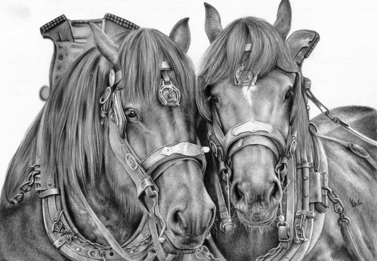 Konie robocze w chomątach.