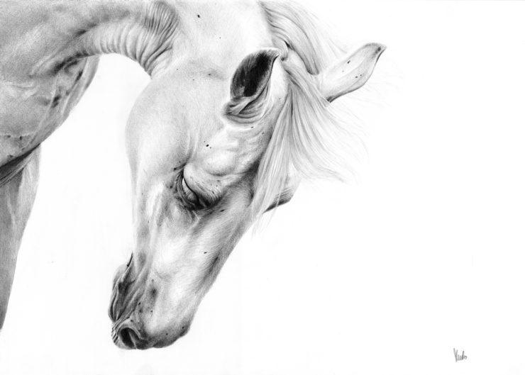 Rysunek siwego konia.