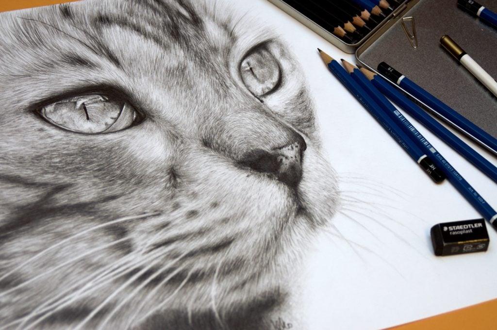 Rysunek szarego pyszczka kota.