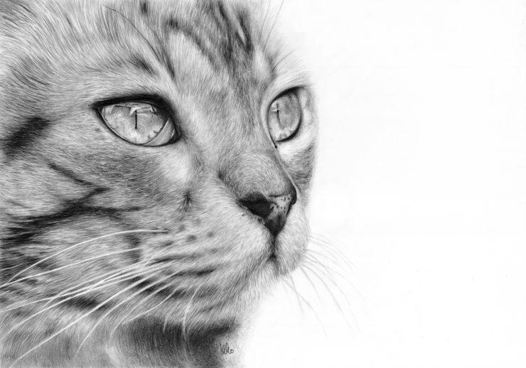Boniek - rysunek pyszczka kota.