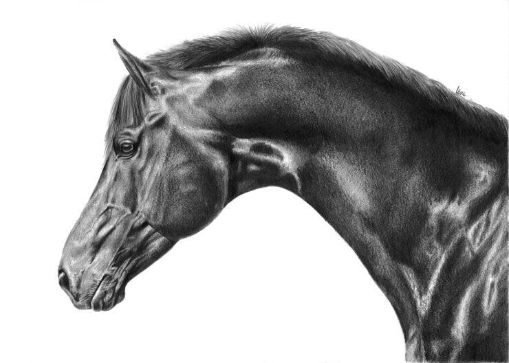Portert konia.