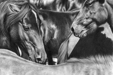 Zbliżenie końskich łbów w stadzie.