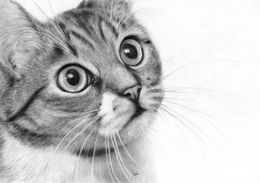 Rysunek kota z dużyki oczami.