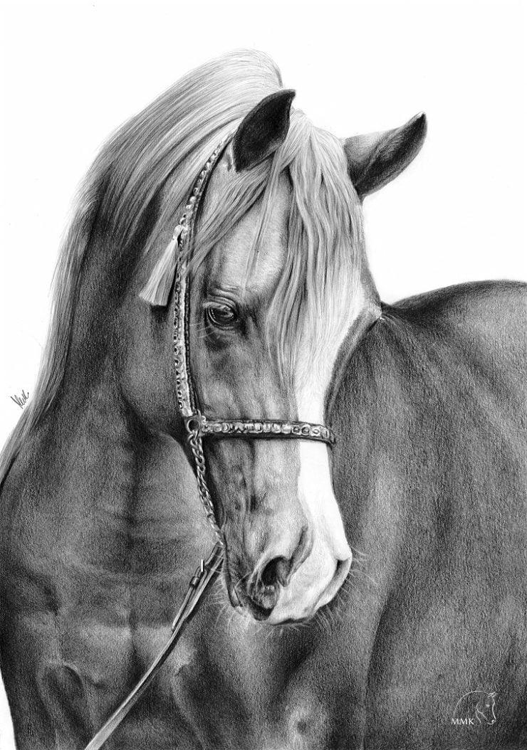 Portret konia arabskiego.