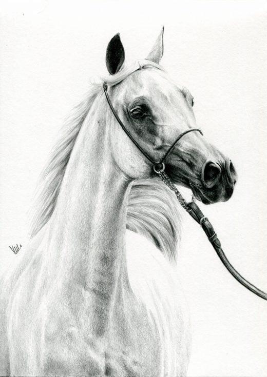 Portret klaczy arabskkiej, Ebory.