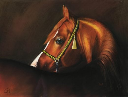 Portret konia arabskiego w kolorze.