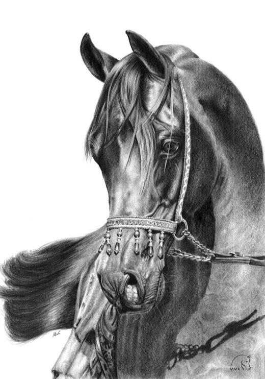 Rysunek arabskiego konia Mihraba.
