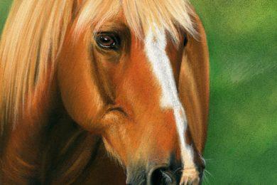 Portret konia zimnokrwistego, wykonany pastelami.
