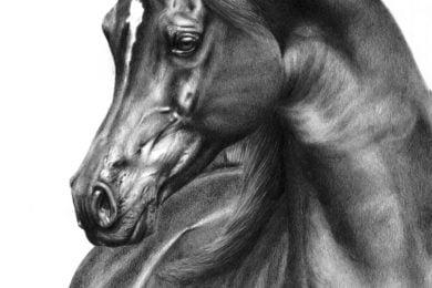 Rysunek arabskiego ogiera - Emerald J.