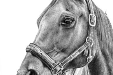 Portret konia w kantarze.
