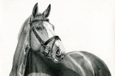 Portret oldenburskiej klaczy Carla.