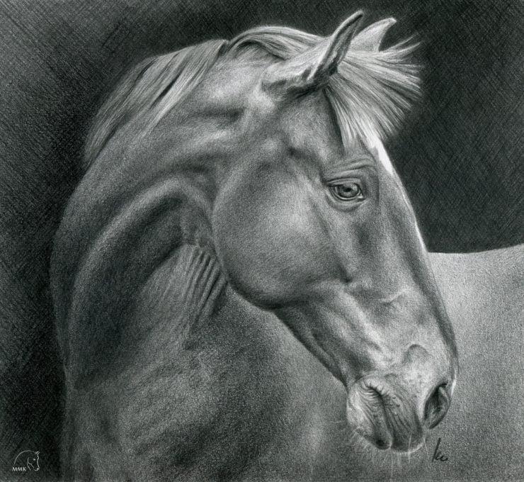 Rysunek konia, profil.