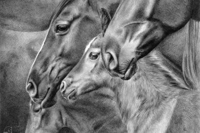 Rysunek źrebaka w otoczeniu dorosłych koni.