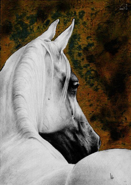Portret siwej klaczy na rdzawym tle.