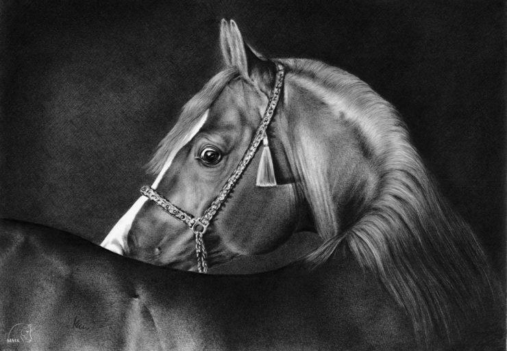 Rysunek konia arabskiego - Psyche Amor