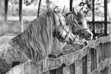 Rysunek koni na padoku.