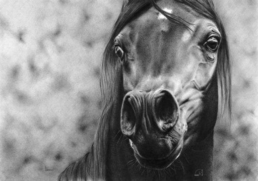 Portret konia z rozdętymi chrapami.