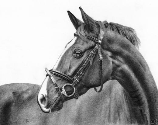 Portret klaczy Eskady.