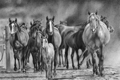 Konie wracające z pastwiska.