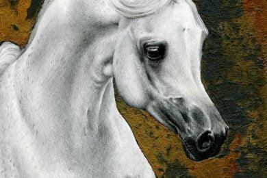 Portret arabskiego ogiera o imieniu Pomian.